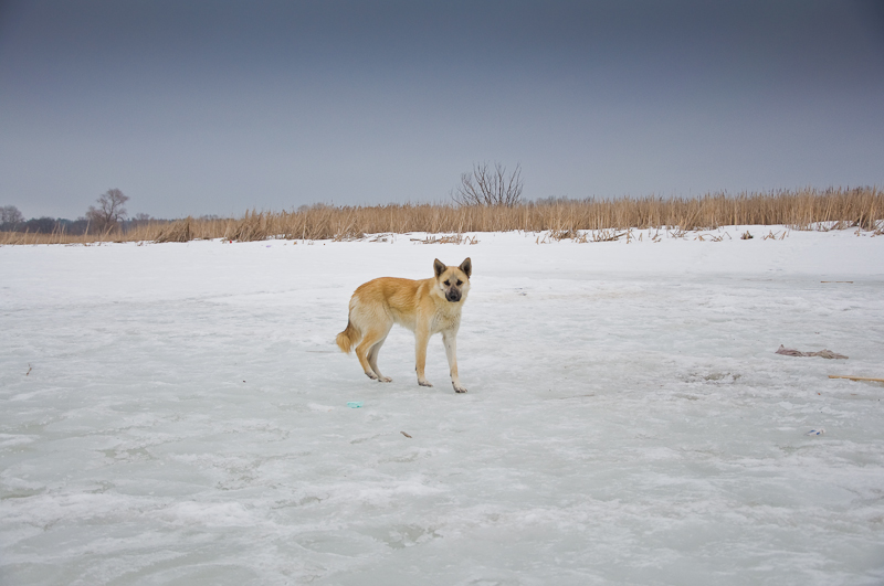 dog-0020.jpg