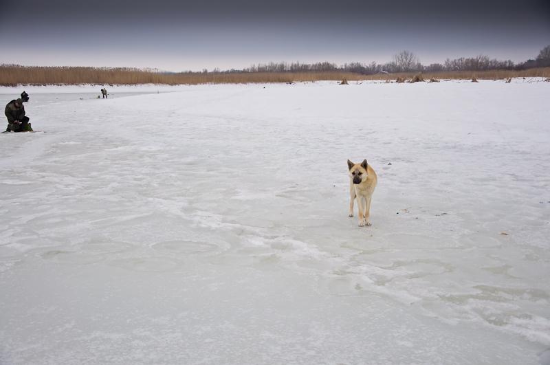 Dog 1-0018.jpg