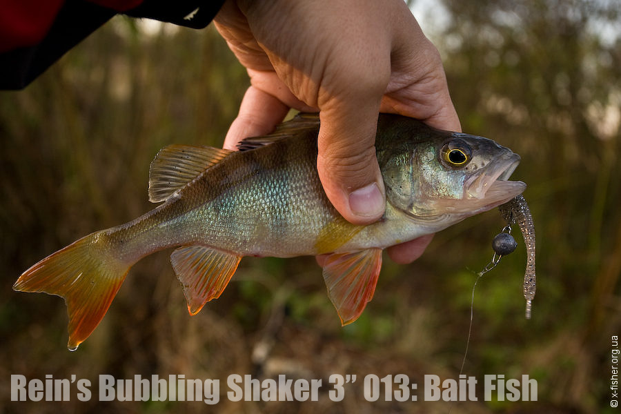 reins_bubbling_shaker_3_013_bait_fish.jpg