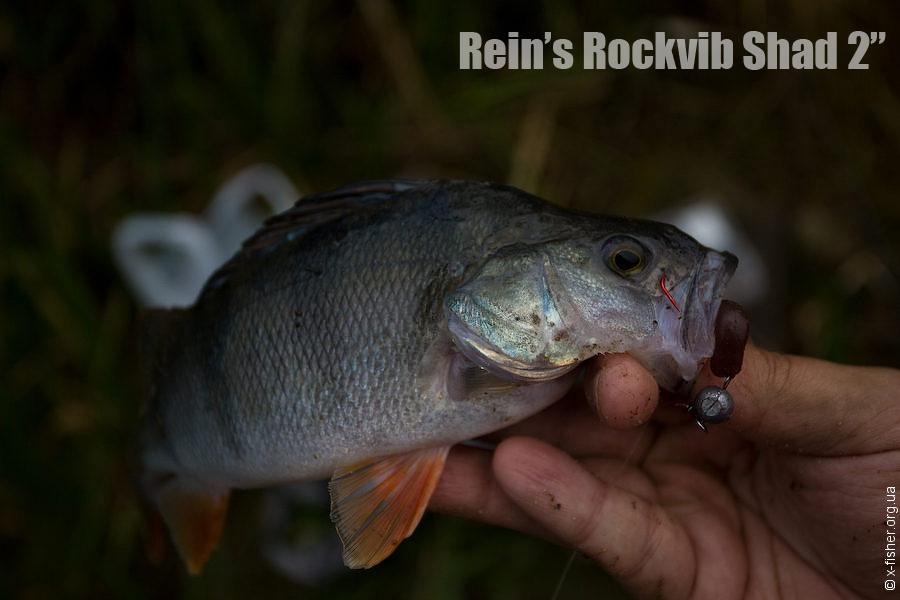 reins_rockvib_shad_2.jpg